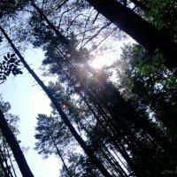 Солнце в лесу :: Nata Grebennikova