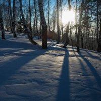 Тени на снегу :: Анатолий Иргл