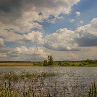 Заросший пруд :: Бронислав Богачевский