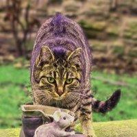 Кошка и мышка :: Надежда