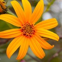 Желтые цветы :: Ольга Евдокимова