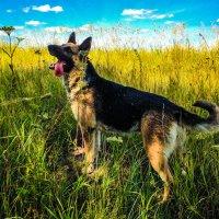 Собачье счастье :: Антон Парфенов