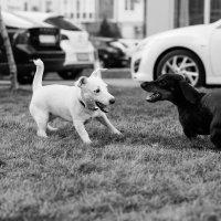 Противостояние чёрного и белого :: Андрей Майоров