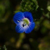 цветик :: Ксения смирнова