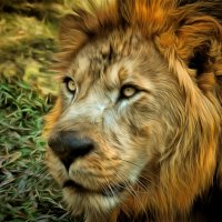 Царь зверей :: Demian