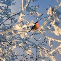 Мороз и солнце :: НАТАЛИ natali-t8