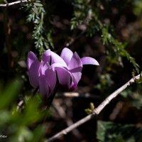 Весенние цветы :: Николай Волков