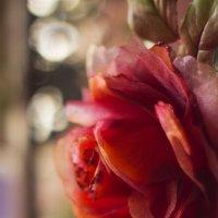 Кто любит розу,полюбит и шипы... :: Галина Стрельченя