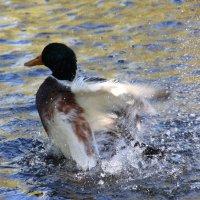 В вихре танца на воде :: Антонина