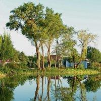 У деревенского пруда. :: Laborant Григоров