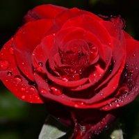 Цвета страсти... :: Алёнка М.