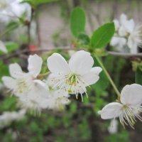 Весна пришла :: Дмитрий Никитин