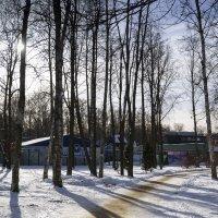 В зимнем парке :: Aнна Зарубина