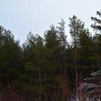 Пейзажик на Дюнах Белого моря. Город Северодвинск. :: Михаил Поскотинов