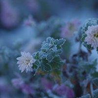 зимы привет :: Ксения смирнова