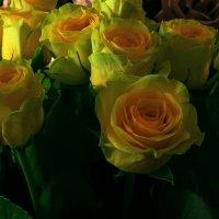 Необычные розы. :: Валерия  Полещикова