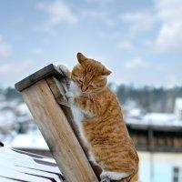 кот на лестнице :: Анна Юдникова