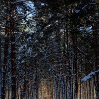 Дорога в лесу. Закат. :: Angelika Faustova