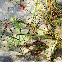 Непредсказуема природа... :: Лесо-Вед (Баранов)