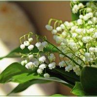 Привет из весны :: Лидия (naum.lidiya)