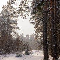 Зимний лес :: Виталий Шарипов