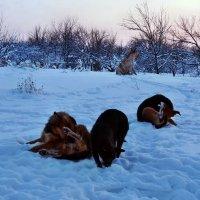 Экскурсия в Гадюкино зимой (46) :: Александр Резуненко