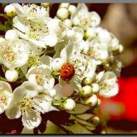 Весна. :: Ivana