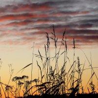 Травы на закате :: Galina