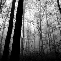 Утро в туманном лесу.. :: Эдвард Фогель