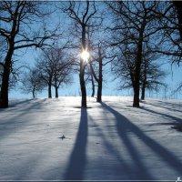 Ложатся тени на снежок... :: Андрей Заломленков
