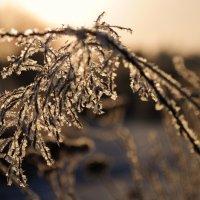 Морозным утром. :: Татьяна Алферова