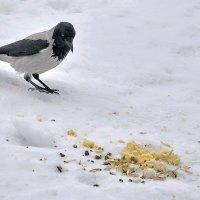 Бог пожалел ворону, сыр послал лисе... :: Алексей Бубнов