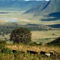 КРАТЕР НГОРОНГОРО (ТАНЗАНИЯ) :: Volmar Safaris