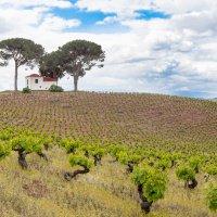 Испанские виноградники весной :: Atuan M