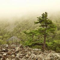 Гору накрывает туман. :: Дмитрий . Вечный дождь .