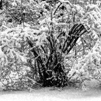 Зимние кружева :: Viacheslav
