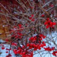 Замерзшая осень :: Анастасия Жучкова