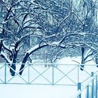 Зима :: Ирина Мищенко