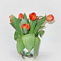 Предвестники рождения Весны... :: Galina Dzubina