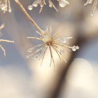 Зимнее макро :: Swetlana V