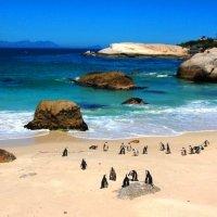 ПИНГВИНЫ (ЮАР) :: Volmar Safaris