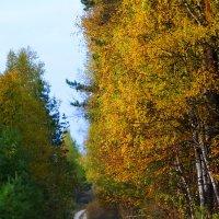 Осень к нам приходит... :: Александра Жорова