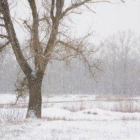 снегопад :: Viktor Eremenko