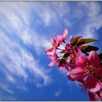 Запах весны :: оксана косатенко