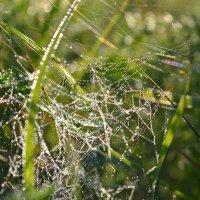 morning dew :: Татьяна Кретова