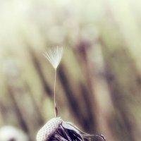 Портрет одуванчика :: Natalia Furina