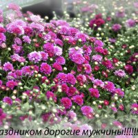 С 23 Февраля!!!!! :: Marina Timoveewa