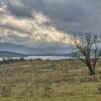 Одинокое дерево :: Игорь Кузьмин