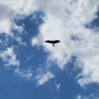 Высокий полёт :: secret-33 Анастасия Е.