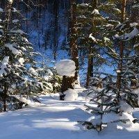 Прогулка по лесу :: Татьяна Соловьева